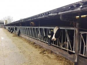 Foto boerderij Zeewolde